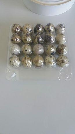 Продам перепелиное яйцо