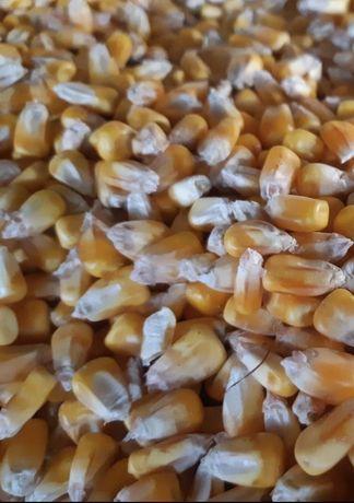 Porumb Cereale 2020