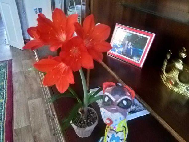 Продам цветы домашние