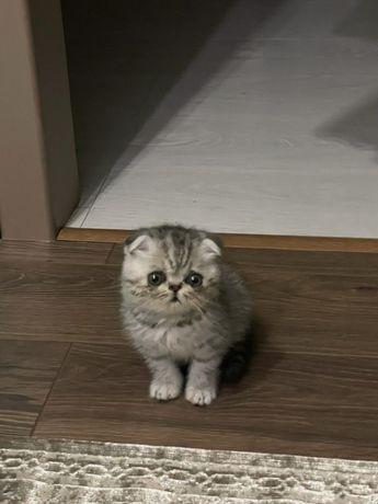 Котенок в любимый дом