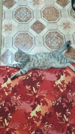 Кошка чистоплотная