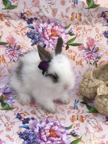Кролики декоративные Карликовые