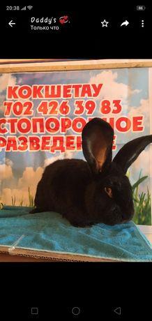 Чистопородные кролики