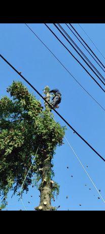 Премахване на опасни дървета - Рязане, кастрене, почистване