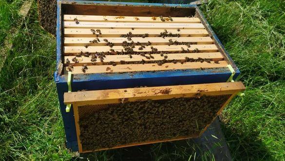 Държачи за пчелни рамки