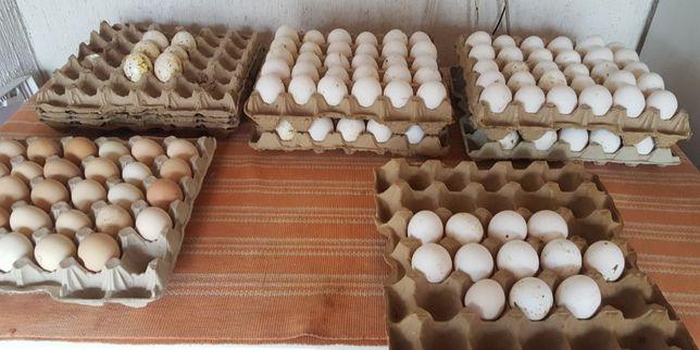 Куры яйца потрошки мясо куриное