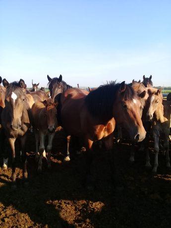 Продам лошадей и жеребят