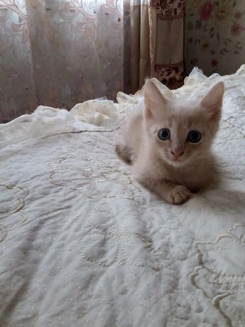 Отдам котика 1,5мес.рн.Стелла