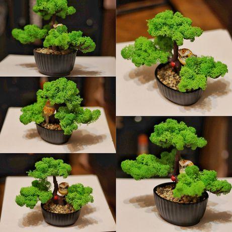 Bonsai cu licheni stabilizați