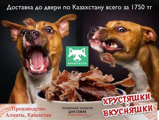 Лакомства для собак вкусняшки корм Экибастуз