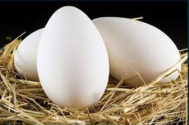 Яйцо гусиные домашние