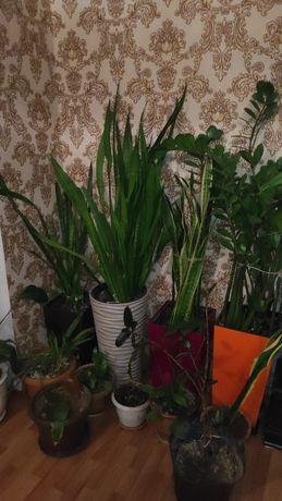 цветы разные для дома и офиса