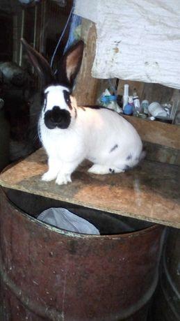 Зайци  Малки и големи от рзлични породи