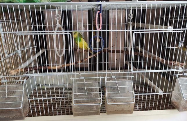 Продам попугая вместе с клеткой