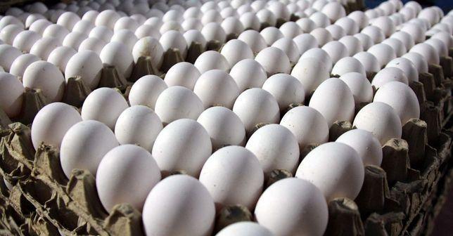 Гусиное инкубационное яйцо оптом и в розницу. Отправка ежедневная