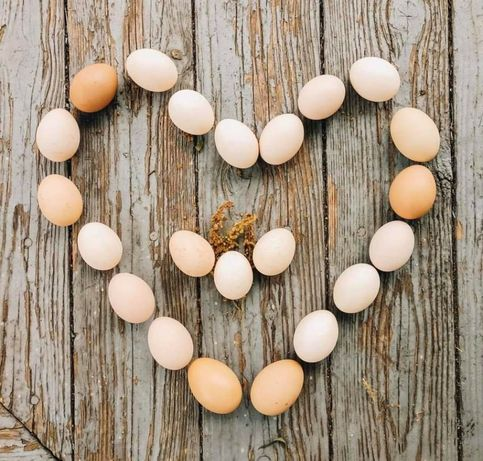 Oua găini de curte