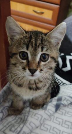 Отдам девочку котенка в заботливые руки!