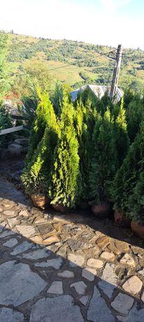 Plante ornamentale pentru o grădină de vis