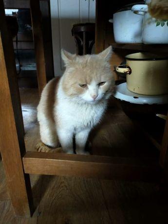 Ищем заботливых хозяев для Кота