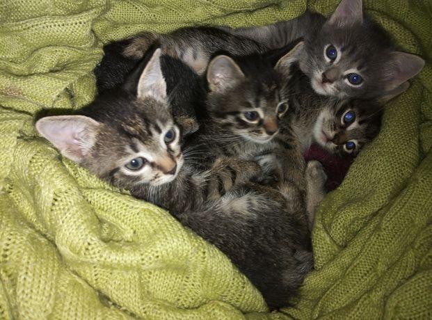 Котята 1 месяц маргаулар 1 ай
