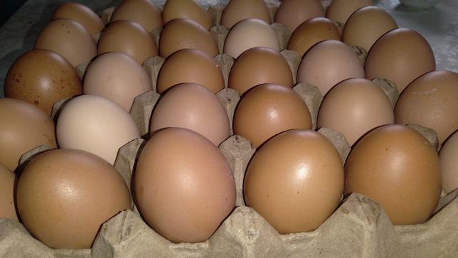 Яйца куриные домашние.