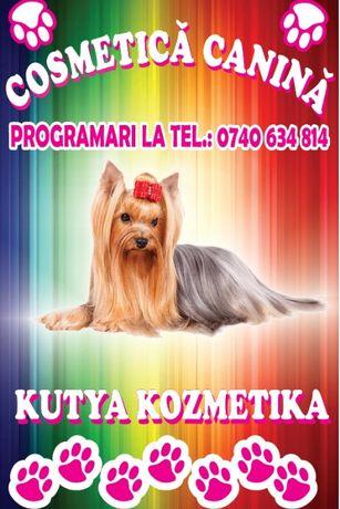 Servicii - Cosmetica Canina - Salon Aniko