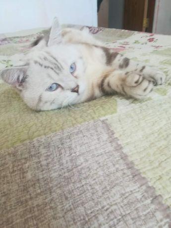 Пропал кот  по кличке Мангол