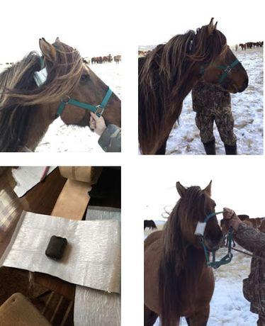 SPOT TRACE спутниковый GPS для лошадей