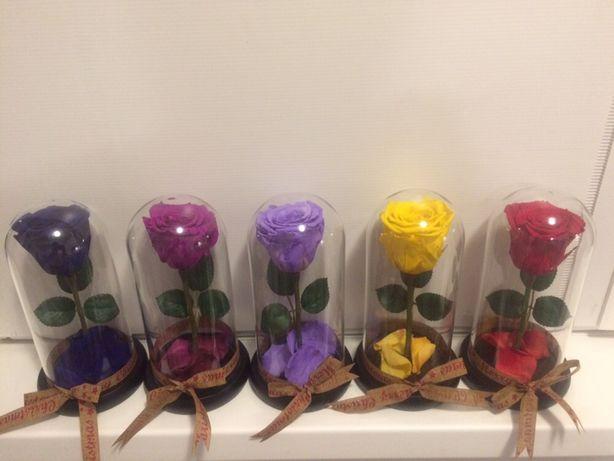 100 lei cupola cu trandafir criogenat