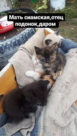 Котята ласковые,игривые