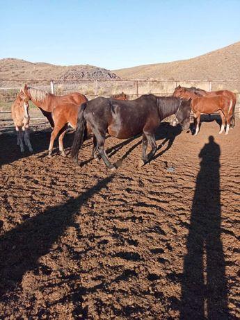 40 голов лошадей