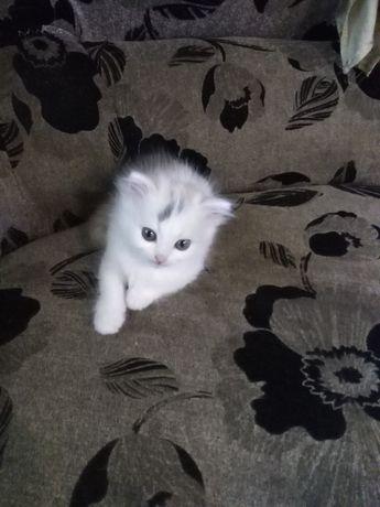 Отдам котенка(кошка)