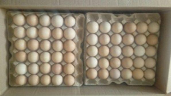 Инкубационные яйца бройлер кобб 500