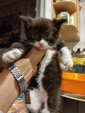 Отдам в добрые руки котят.