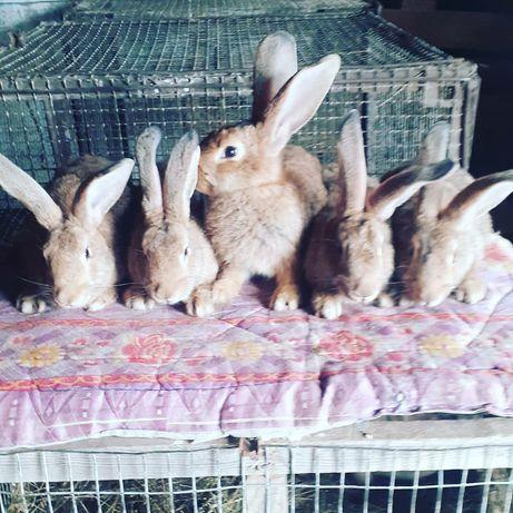 Продам кроликов разных возрастов есть разные породы