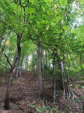 Pădure de vânzare