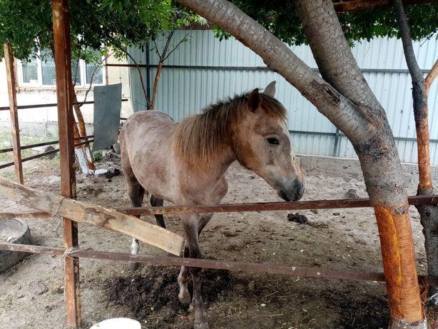 Ат, жылкы, лошадь