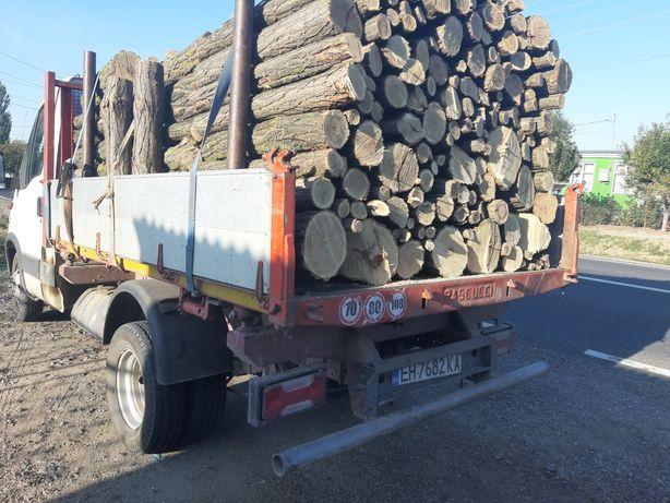 lemne foc salcam