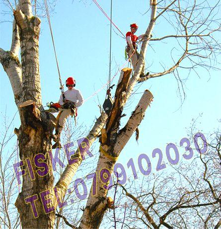 Oferta taiere copaci, toaletare crengi pomi inalti rapid cu alpinisti