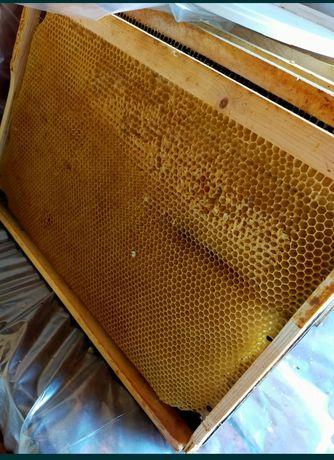 Продам мед натуральный полевое разнотравье с собственной пасеки. Эколо