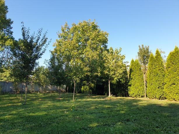 Vand Teren intravilan langa padure o ora de Bucuresti