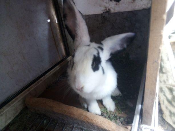 Продам Кроликов Разных цветов Большие и маленькие