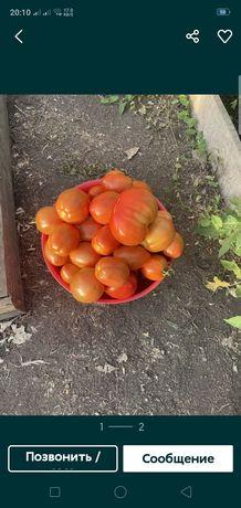 Продаю домашние помидоры