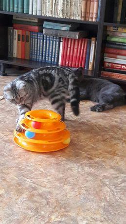 Вязка котика  молодой  опытный