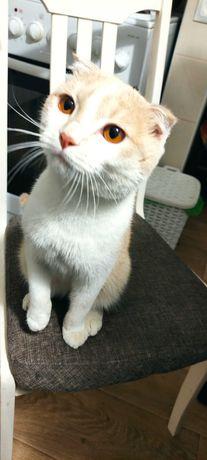 Найден домашний кот