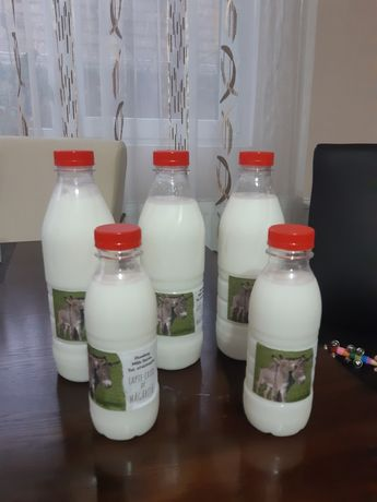 Lapte proaspăt de măgăriță