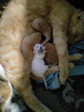 Ребята помогите найти хозяевам в хорошие руки котят