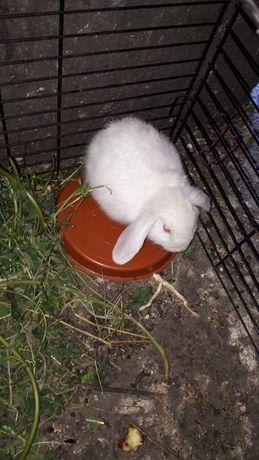 Кролики в наличии декор.