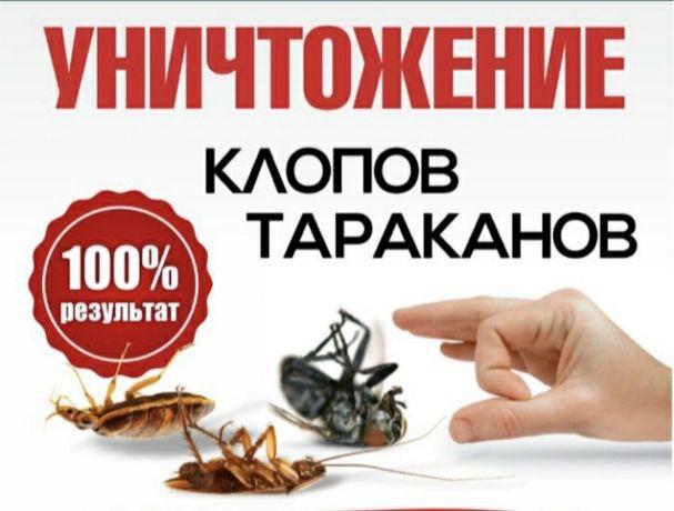 Услуги СЭС! г. Экибастуз! Дезинфекция от насекомых! Цены от 6000тенге!