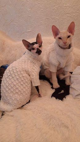 Вязанная одежда для кошек и маленьких собак